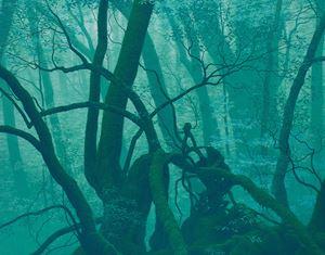 Root by Kazuyuki Futagawa contemporary artwork