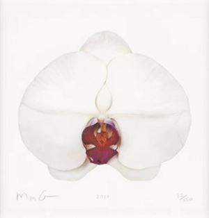 White Orchid by Marc Quinn contemporary artwork