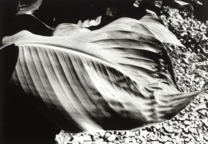 HIKARI TO KAGE (Light and Shadow) by Daido Moriyama contemporary artwork