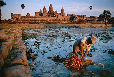 Lotus Gatherer, Cambodia by Steve McCurry contemporary artwork