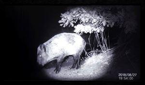 Eluding 'humans' (Wild Boar) by Elmas Deniz contemporary artwork