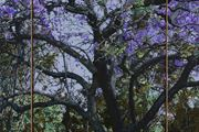 D.116 Purple Reign by Gary Carsley contemporary artwork 3