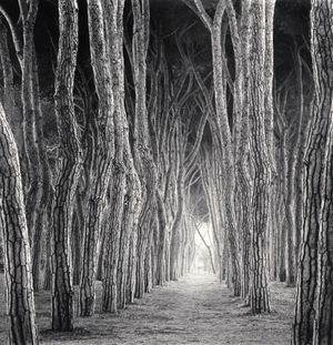 Stone Pine Tunnel by Michael Kenna contemporary artwork
