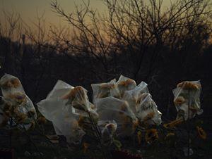 From 'For The Sake of Calmness' series by Newsha Tavakolian contemporary artwork