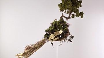 Contemporary art exhibition, Les mousses, sentinelles de la pollution at Musée de l'Homme at A2Z Art Gallery, Paris, France