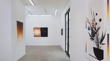 Contemporary art exhibition, Martin Basher, Birds of Paradise at AE2, AE2, Los Angeles, USA