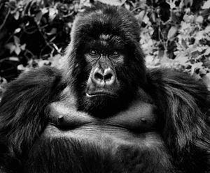 King Kong by David Yarrow contemporary artwork
