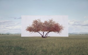 Tree... #2 by Lee Myoung-Ho contemporary artwork