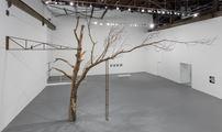 Tree by Zoe Leonard contemporary artwork 1