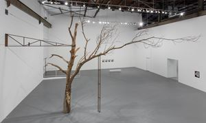 Tree by Zoe Leonard contemporary artwork