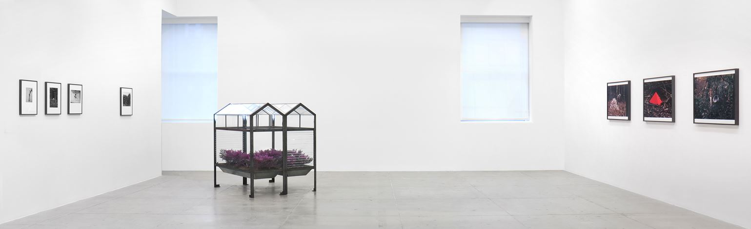 Exhibition view: Lothar Baumgarten, The Early Years, Marian Goodman Gallery, New York (9 January–5 February 2020). Courtesy Marian Goodman Gallery.
