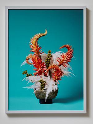 The Redhead Toe Toe (Austroderia sp) by Ann Shelton contemporary artwork