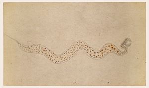 Brown Spotted Snake by Bill Traylor contemporary artwork