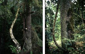 Site Displacement / Déplacement de site by Eric Baudelaire contemporary artwork