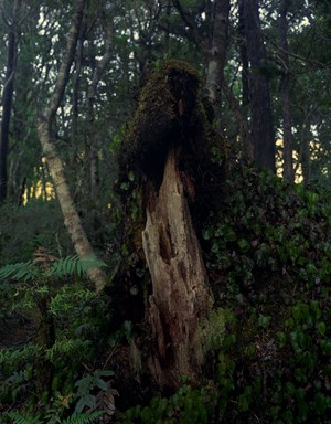 22. 6. 2014. Totara Stump, Astronomers Point, Pickersgill Harbour, Tamatea-Dusky Sound by Mark Adams contemporary artwork
