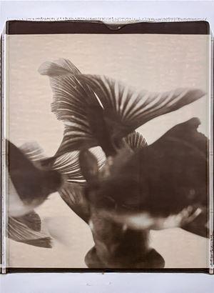 Untitled 《無題》 by Caroline CHIU contemporary artwork