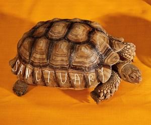 Turtle by Roe Ethridge contemporary artwork