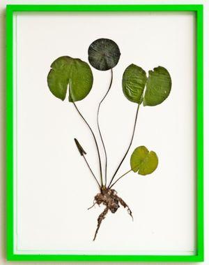 Herbarium by Olafur Eliasson contemporary artwork works on paper
