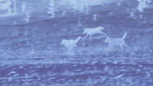 The Romantic Hunter by Chen Dandizi contemporary artwork