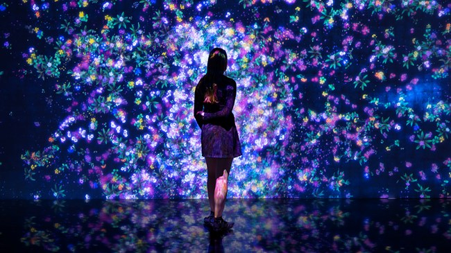Flowers and People, Cannot be Controlled but Live Together – A Whole Year Per Year, by teamLab contemporary artwork