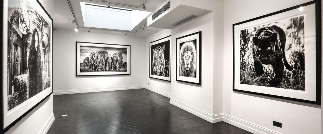 In Focus: An Immersive Digital Exhibition