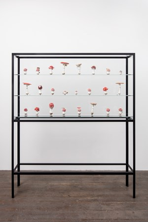 Double Mushroom Vitrine  (Twenty - Fourfold) by Carsten Höller contemporary artwork