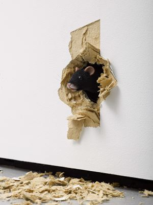 The End by Ryan Gander contemporary artwork