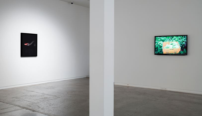 Greta Anderson, National Geographic,2016 , Exhibition view, Two Rooms, Auckland. Courtesy Two Rooms, Auckland.