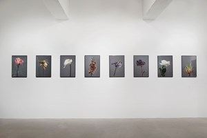 Future Archive for the Future-past no.1 – 8 by Gabriel Leung contemporary artwork