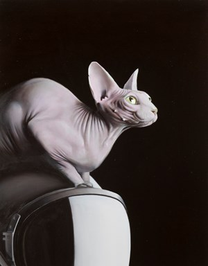 Cat on Leonov Helmet by Sam Leach contemporary artwork