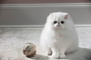 Cat with Yarn Ball by Roe Ethridge contemporary artwork