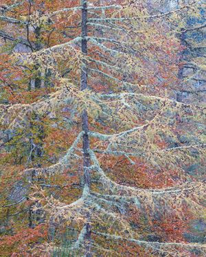 Autumn Tapestry 1 by Stephen King contemporary artwork