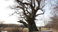 The tree I want to buy by Elmas Deniz contemporary artwork moving image