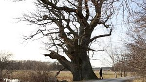The tree I want to buy by Elmas Deniz contemporary artwork