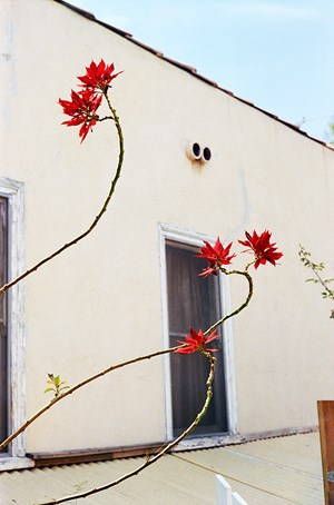 Untitled by William Eggleston contemporary artwork