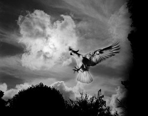 Cockatoo, backyard, Newcastle, New South Wales by Trent Parke contemporary artwork