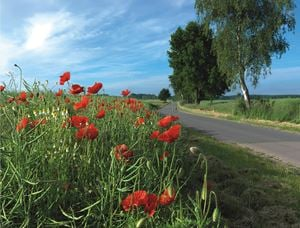 Mohn by Ralf Peters contemporary artwork photography, print