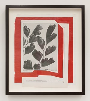 Formen Des Lebens by Hugh Scott-Douglas contemporary artwork