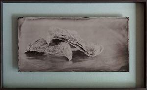 2 Austern by Steffen Diemer contemporary artwork