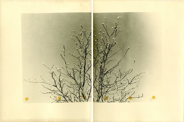 Bruno V. Roels, A Guide To Cherry Blossoms (Lemon Yellow Split)(2019). Composition of two gelatin silver prints with ink. 40 x 50 cm. Courtesy Gallery FIFTY ONE.