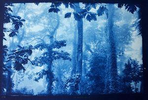 Manzanillo Gandoca, Costa Rica -De la serie La selva Azul by Javier Hinojosa contemporary artwork print
