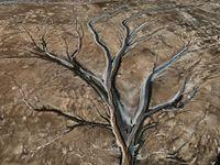 Colorado River Delta #12, Sonora, Mexico by Edward Burtynsky contemporary artwork photography
