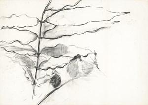 Leaves 181024 葉子181024 by Jeng Jundian contemporary artwork