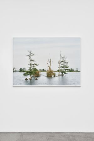 Fragment I: Swamp, April 17, Venice, Louisiana, from The Silent General by An-My Lê contemporary artwork