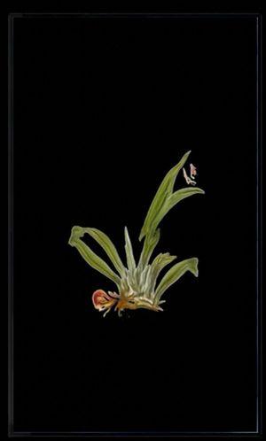 Infinite Herbarium Morphosis #4 by Caroline Rothwell contemporary artwork moving image