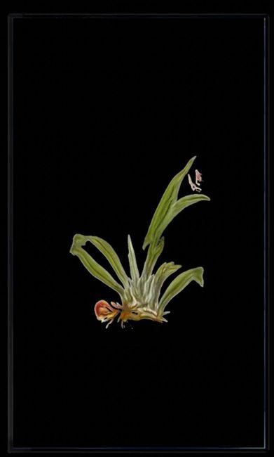 Infinite Herbarium Morphosis #4 by Caroline Rothwell contemporary artwork