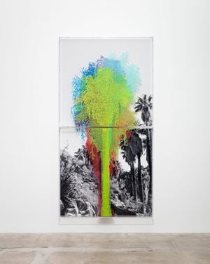 Numbers and Trees: Palm Canyon, Palm Trees Series 2, Tree #7, Mission by Charles Gaines contemporary artwork