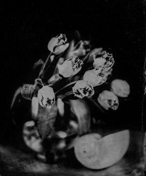 Tulip with Mussel by Steffen Diemer contemporary artwork