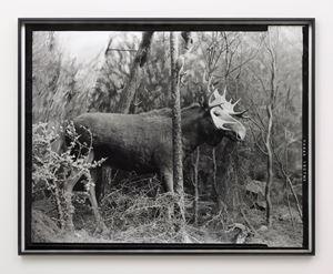 Eighteenth beast by Gerard Byrne contemporary artwork
