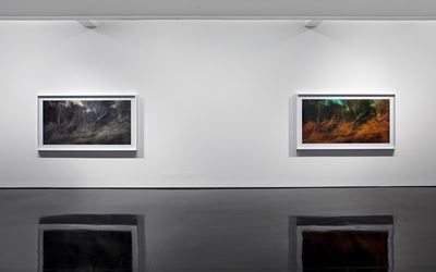 Rosemary Laing,effort and rush Exhibition view, Tolarno Galleries. Photo: Andrew Curtis.